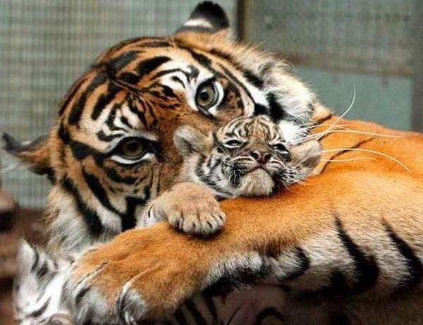 Madre Animal
