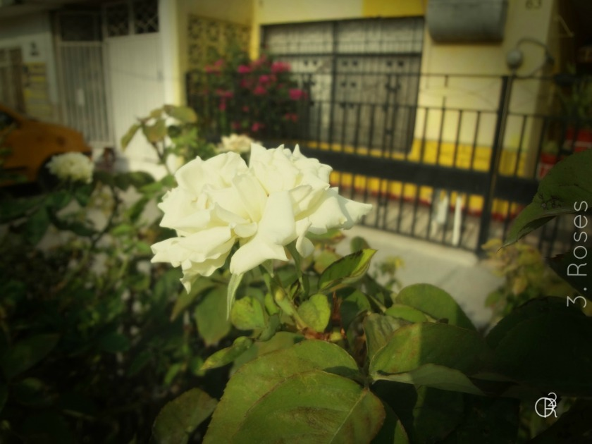 03.Roses.jpg