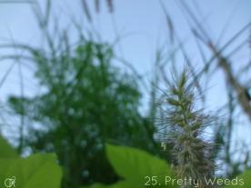 25.Pretty Weeds-