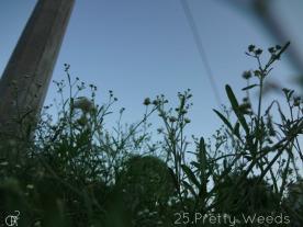 25.Pretty Weeds_
