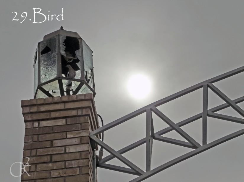 29.Bird